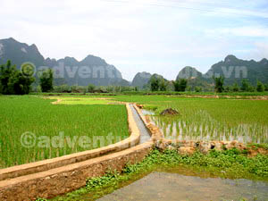 Rice fild in Cao Bang